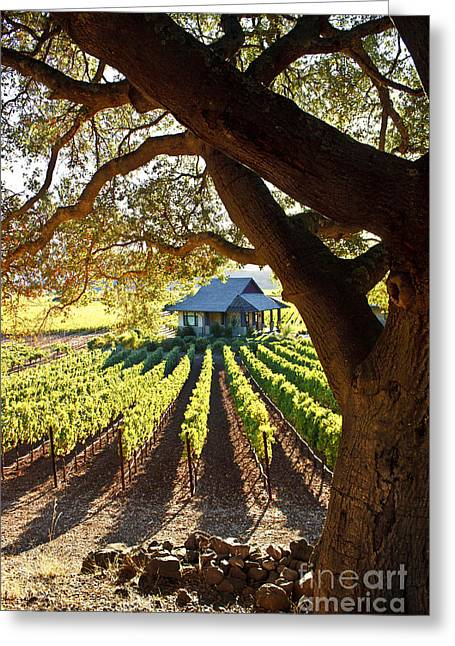 Northern California Vineyards Greeting Cards - Napa Valley Homestead Greeting Card by Ellen Cotton
