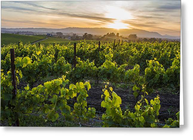 Northern California Vineyards Greeting Cards - Napa Valley Sunset  Greeting Card by John McGraw