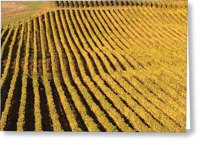 Vineyard Art Greeting Cards - Napa Valley Vineyard 7D9062 square Greeting Card by Wingsdomain Art and Photography