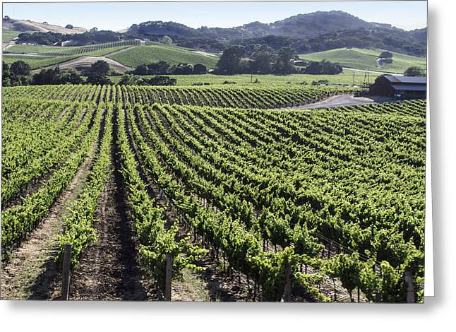 Napa Valley Vineyard Greeting Card by Dee  Savage