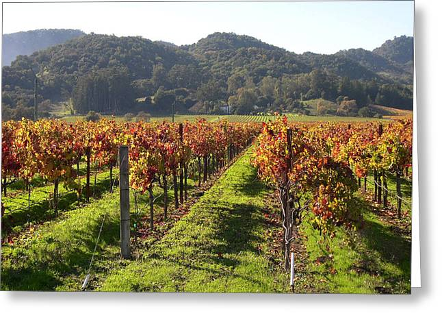 California Vineyard Greeting Cards - Napa Valley Vineyards Greeting Card by Armand Cabrera