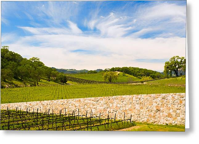 Napa Valley Vineyard Greeting Cards - Napa Vineyard #2 Greeting Card by Mick Burkey