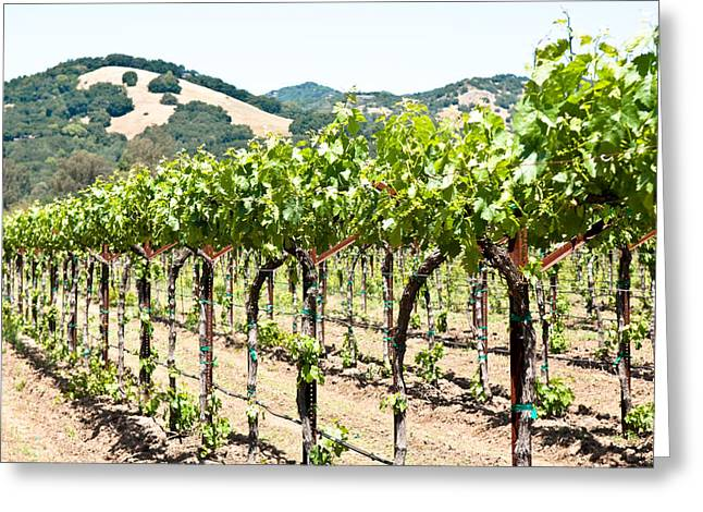 Napa Vineyard Grapes Greeting Card by Shane Kelly