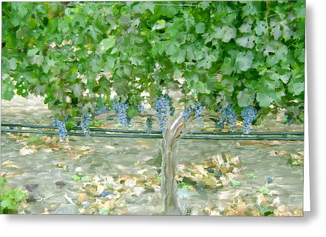 Calistoga Digital Art Greeting Cards - Napa Vineyard Greeting Card by Paul Tagliamonte