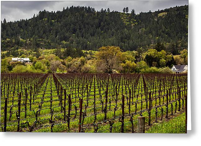 Sonoma County Olives Greeting Cards - Napa Vineyard Spring Greeting Card by John Crowe