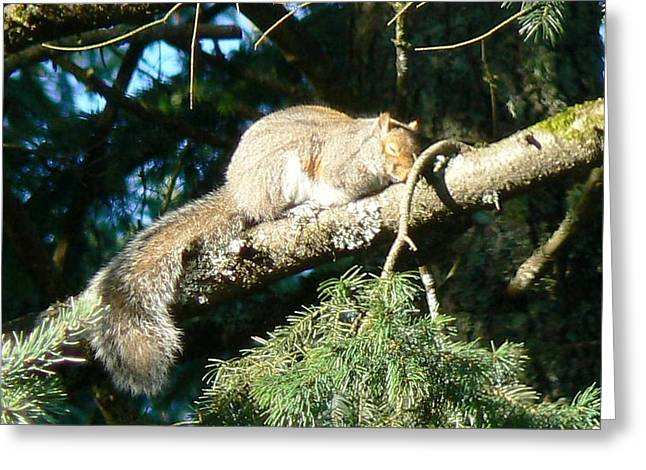 Tia Marie Mcdermid Greeting Cards - Naptime Squirrel Greeting Card by Tia Marie McDermid