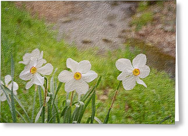 Spring Bulbs Mixed Media Greeting Cards - Narcissi Greeting Card by Steven  Michael