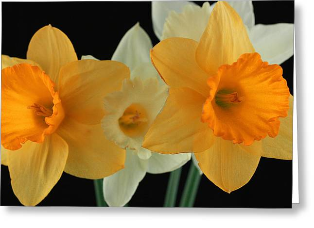 Romanticism Greeting Cards - Narcissus 2 Greeting Card by Mark Ashkenazi