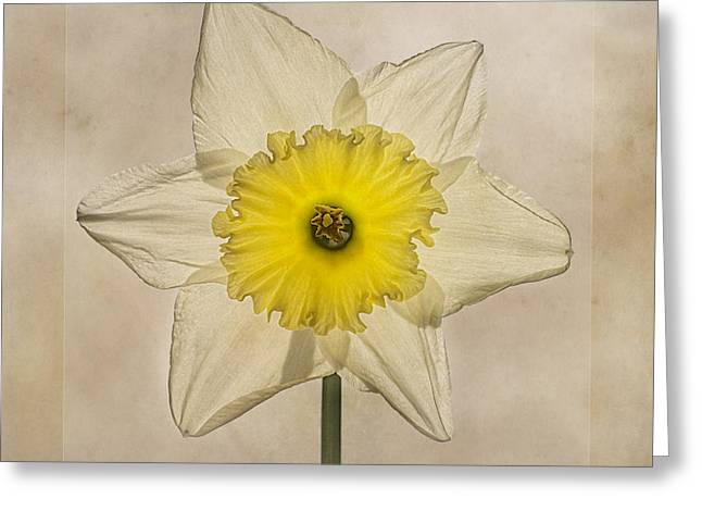 Seasonal Digital Art Greeting Cards - Narcissus Las Vegas Greeting Card by John Edwards