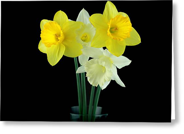 Narcissus Greeting Card by Mark Ashkenazi
