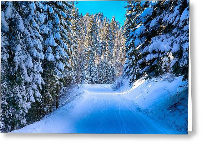 Evergreen With Snow Greeting Cards - Narrow road in the forest Greeting Card by Lynn Hopwood