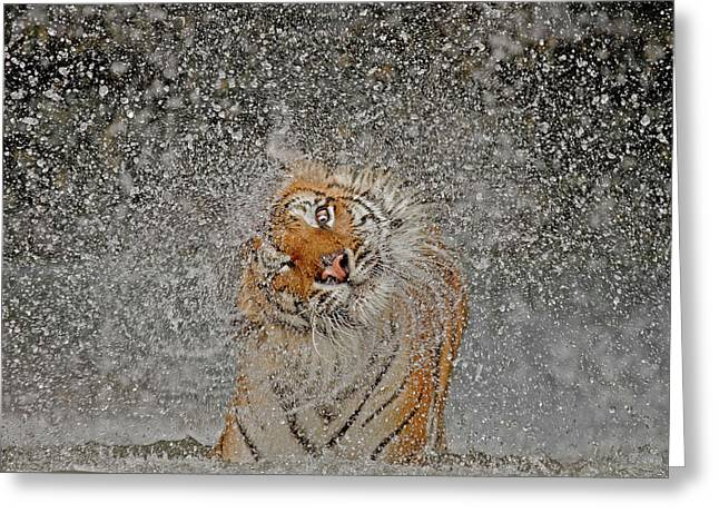 Nat Geo Recognition A?? The Explosion Greeting Card by Ashley Vincent