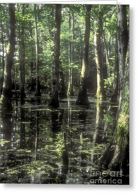 Recently Sold -  - Natchez Trace Parkway Greeting Cards - Natchez Trace Cypress Greeting Card by Bob Phillips