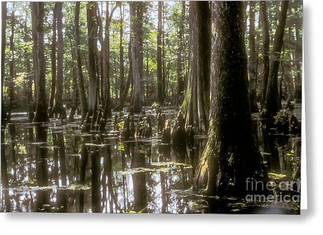 Natchez Trace Parkway Greeting Cards - Natchez Trace Wetlands Greeting Card by Bob Phillips