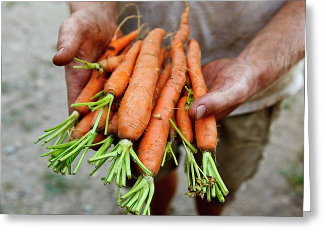 Nate Frigard Holding Carrots Recently Greeting Card by Jerry and Marcy Monkman