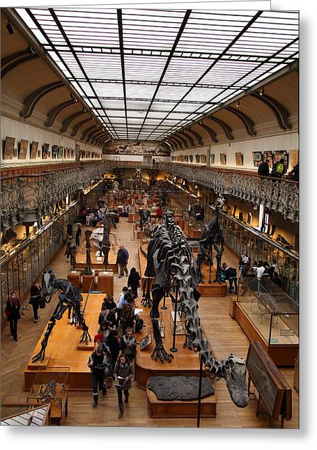 Bones Greeting Cards - National Museum of Natural History - Paris France - 011326 Greeting Card by DC Photographer