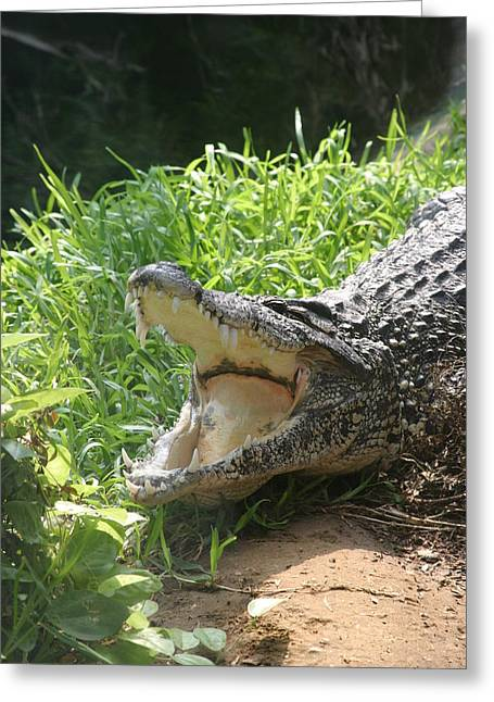 Gator Greeting Cards - National Zoo - Alligator - 12123 Greeting Card by DC Photographer