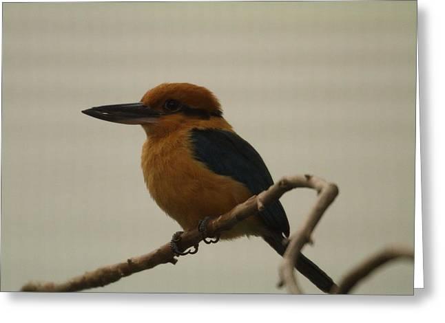 Birding Photographs Greeting Cards - National Zoo - Birds - 011317 Greeting Card by DC Photographer