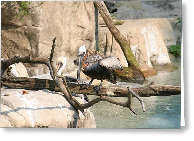National Zoo - Birds - 121216 Greeting Card by DC Photographer