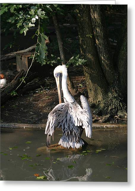 Zoos Greeting Cards - National Zoo - Birds - 12124 Greeting Card by DC Photographer