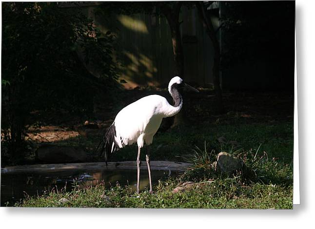 Animal Greeting Cards - National Zoo - Birds - 12125 Greeting Card by DC Photographer