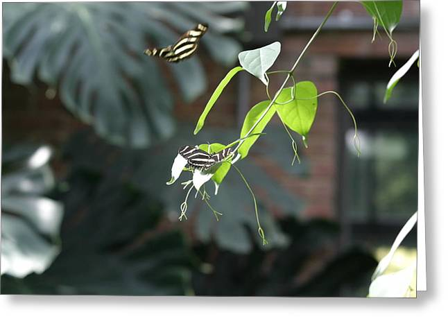 Flies Greeting Cards - National Zoo - Butterfly - 12123 Greeting Card by DC Photographer