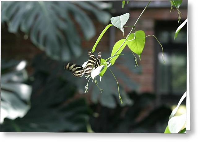 Flies Greeting Cards - National Zoo - Butterfly - 12125 Greeting Card by DC Photographer