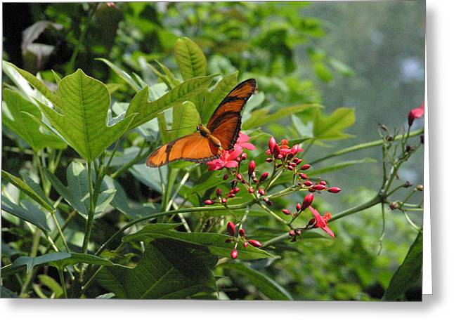 National Zoo - Butterfly - 12126 Greeting Card by DC Photographer