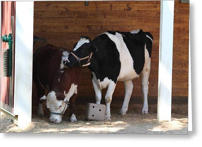 Cow Photographs Greeting Cards - National Zoo - Cow - 01131 Greeting Card by DC Photographer