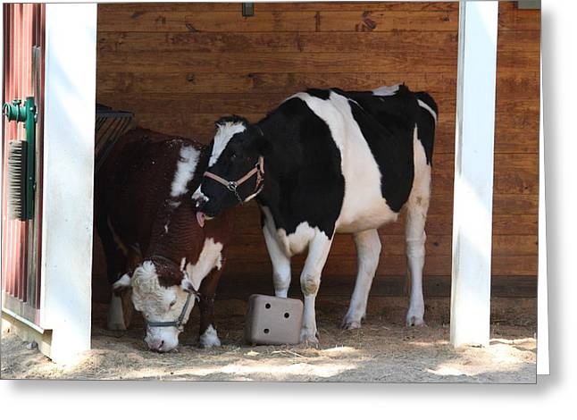 Cow Greeting Cards - National Zoo - Cow - 01132 Greeting Card by DC Photographer
