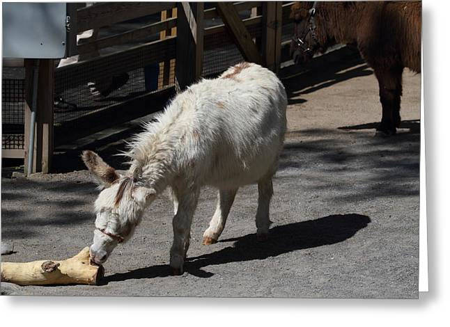 National Zoo - Donkey - 01136 Greeting Card by DC Photographer