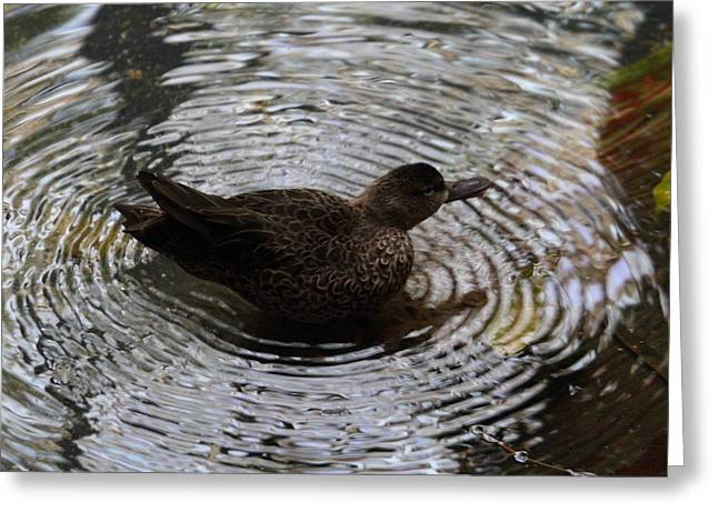 Duck Greeting Cards - National Zoo - Duck - 01135 Greeting Card by DC Photographer