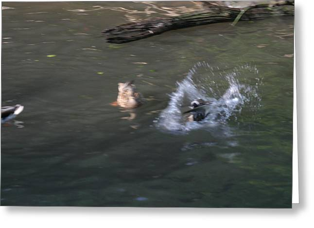 Ducky Greeting Cards - National Zoo - Duck - 12124 Greeting Card by DC Photographer