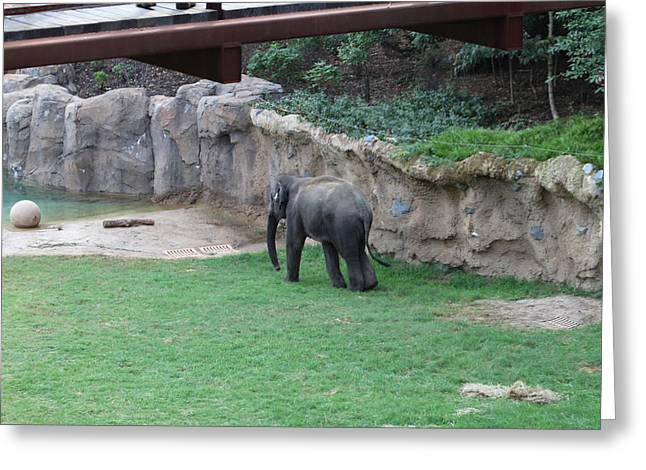 Elaphant Greeting Cards - National Zoo - Elephant - 011310 Greeting Card by DC Photographer