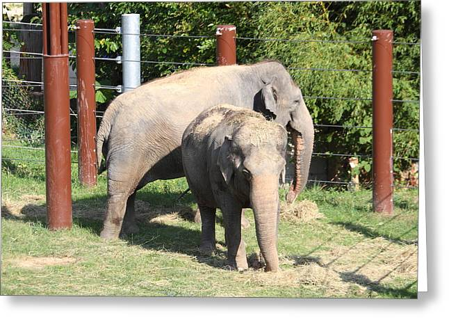 Elaphant Greeting Cards - National Zoo - Elephant - 011312 Greeting Card by DC Photographer