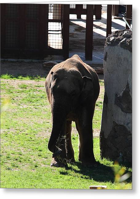 Elaphant Greeting Cards - National Zoo - Elephant - 011315 Greeting Card by DC Photographer