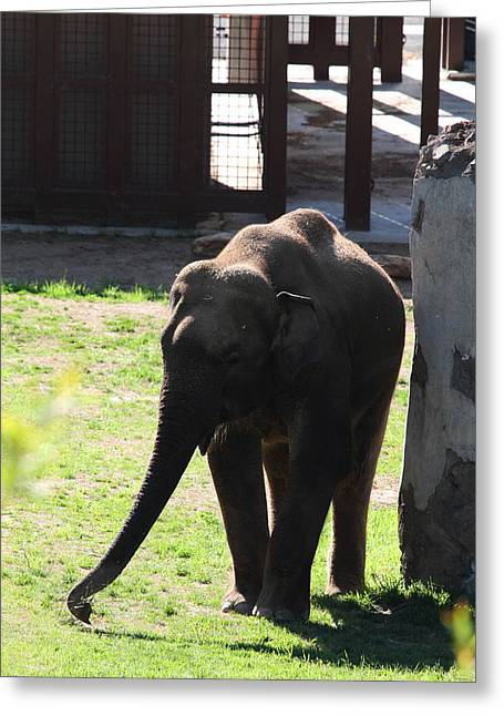 Chang Greeting Cards - National Zoo - Elephant - 011316 Greeting Card by DC Photographer