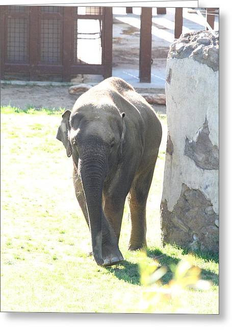 Elaphant Greeting Cards - National Zoo - Elephant - 011317 Greeting Card by DC Photographer