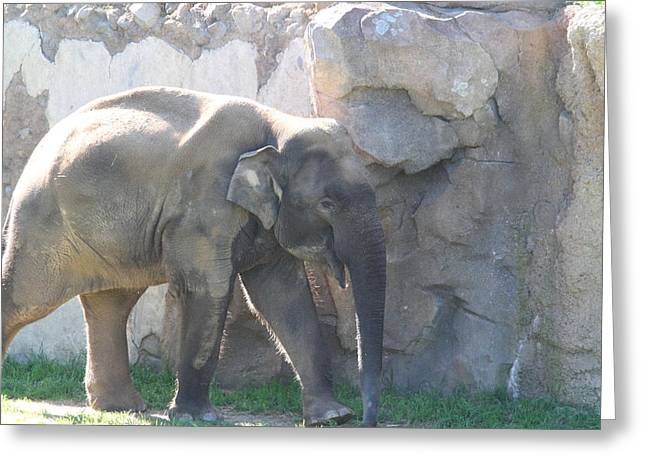 Elaphant Greeting Cards - National Zoo - Elephant - 011318 Greeting Card by DC Photographer