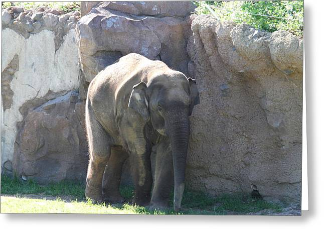 Elaphant Greeting Cards - National Zoo - Elephant - 011319 Greeting Card by DC Photographer