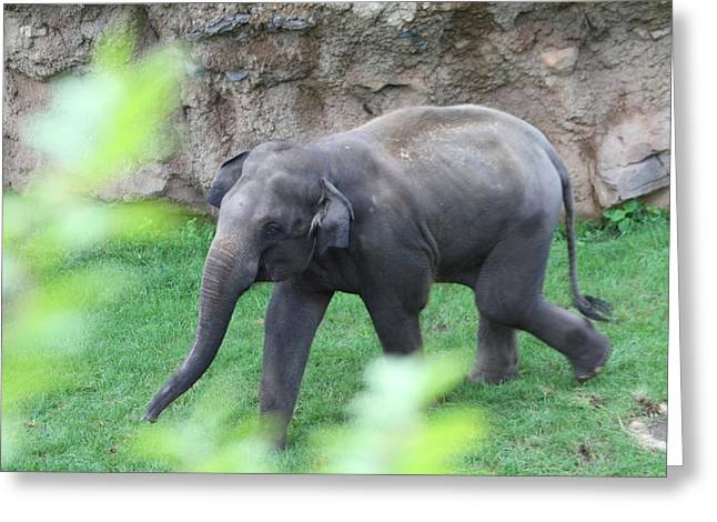 Elaphant Greeting Cards - National Zoo - Elephant - 01136 Greeting Card by DC Photographer
