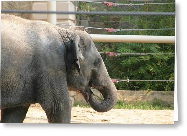 Elaphant Greeting Cards - National Zoo - Elephant - 121212 Greeting Card by DC Photographer