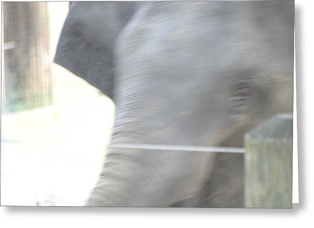 Elaphant Greeting Cards - National Zoo - Elephant - 12124 Greeting Card by DC Photographer