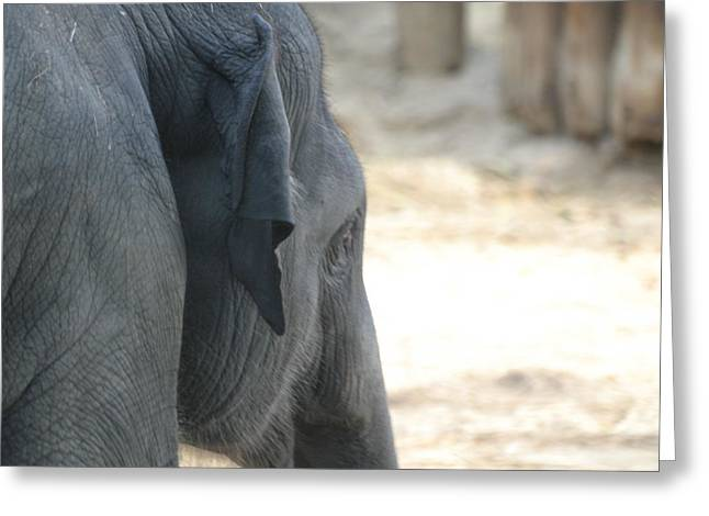National Zoo - Elephant - 12125 Greeting Card by DC Photographer