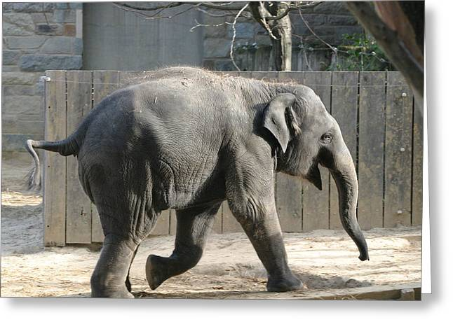 Elaphant Greeting Cards - National Zoo - Elephant - 12126 Greeting Card by DC Photographer