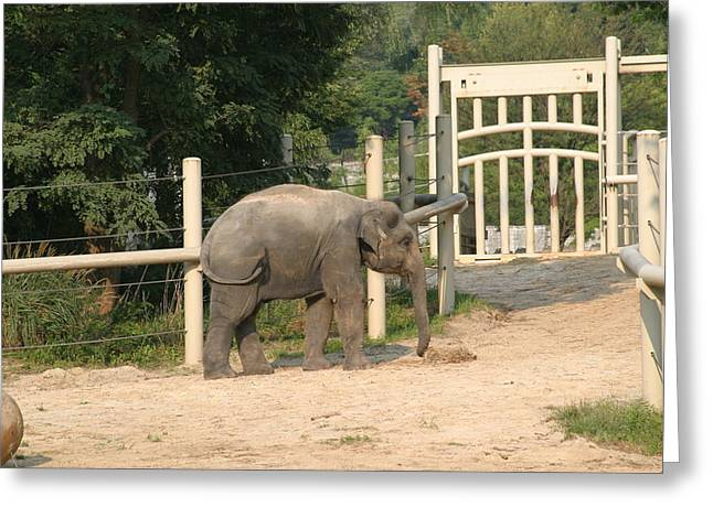 Elaphant Greeting Cards - National Zoo - Elephant - 12127 Greeting Card by DC Photographer
