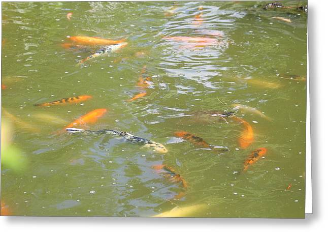 Aqua Greeting Cards - National Zoo - Fish - 011317 Greeting Card by DC Photographer