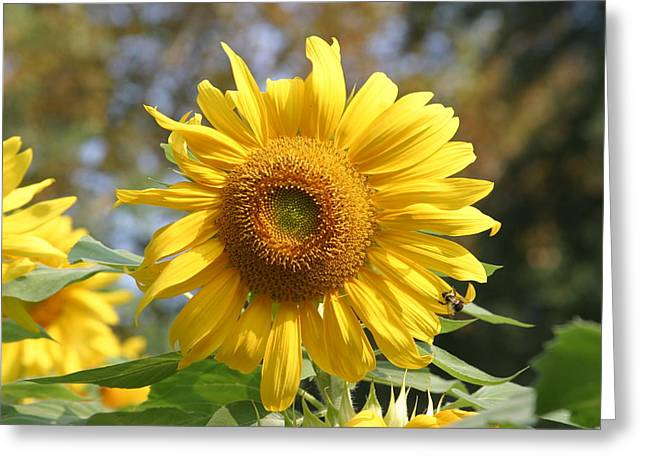 National Zoo - Flower - 12126 Greeting Card by DC Photographer