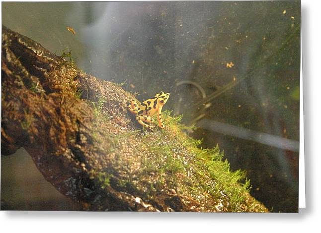 Frogs Photographs Greeting Cards - National Zoo - Frog - 12121 Greeting Card by DC Photographer