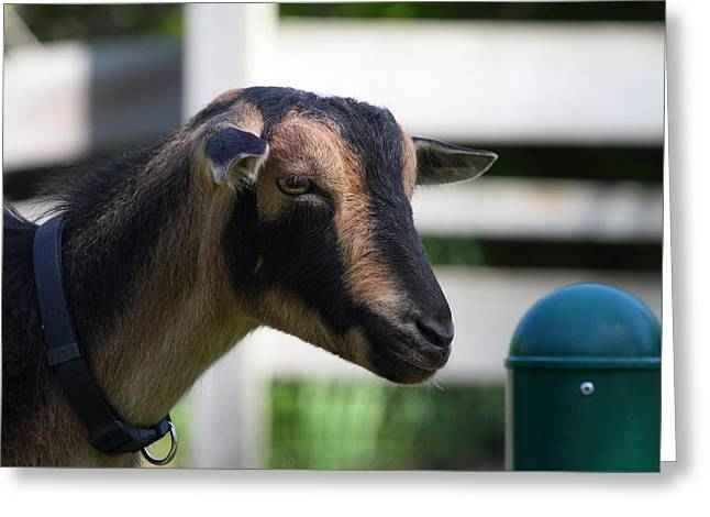 National Zoo - Goat - 01132 Greeting Card by DC Photographer